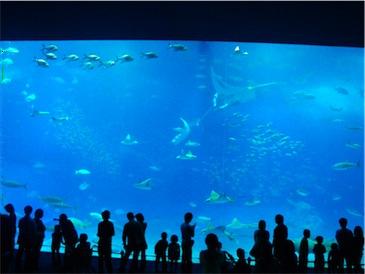 大水槽黒潮の海.jpg